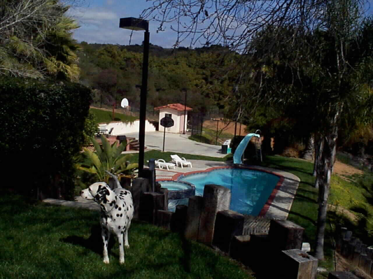A dog's life in Bonsall